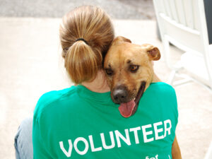 volunteer-with-dog-at-an-animal-shelter1